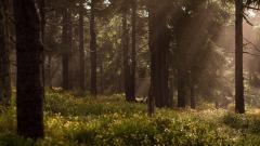 Natuurgebied Springendal